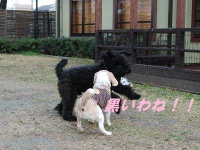 2009・01・26宝塚4