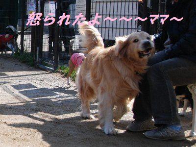 2009・01・26宝塚5