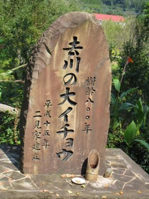 去川の大銀杏石碑