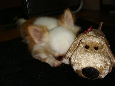 ミニ 犬おもちゃ