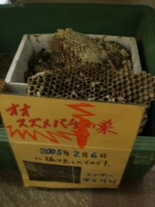 PA070347ハチの巣