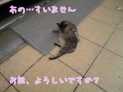 はじめての猫さん