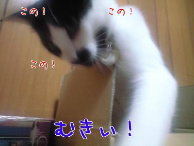 こ( ゚Д゚)ドルァ!!