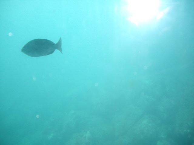 魚がいたよ