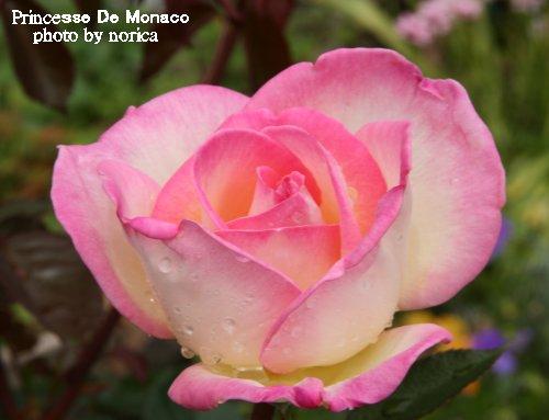 Princesse De Monaco 1