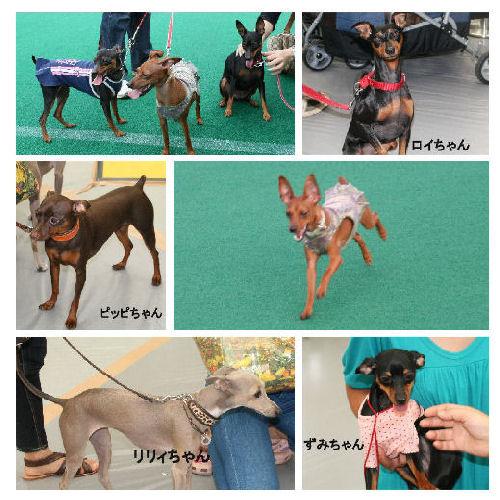dog-2008-1_ページ000