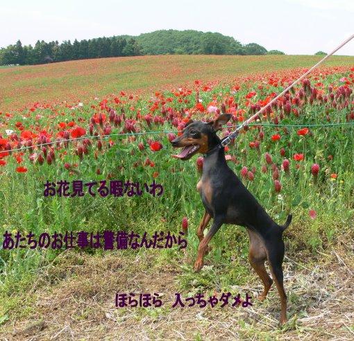 bokujyou-sora1.jpg