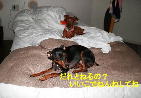 fukushima21.jpg