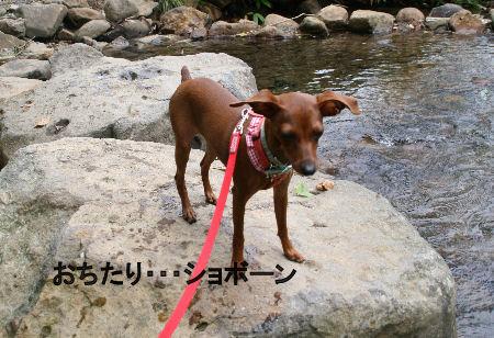 fukushima27.jpg