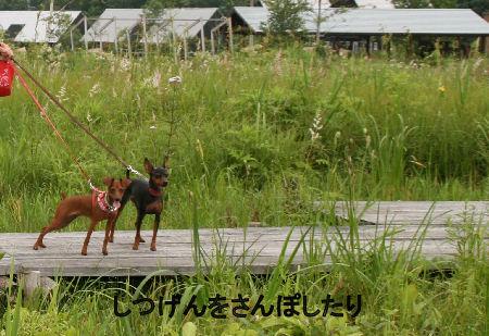 fukushima28.jpg
