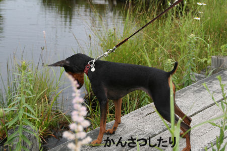 fukushima29.jpg