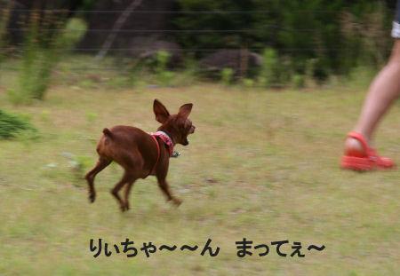 fukushima6.jpg