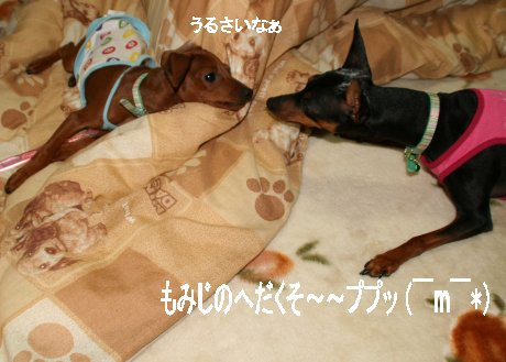 momiji-1-2.jpg
