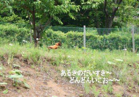 momiji-1-yamanoue1.jpg