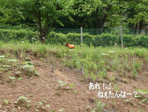 momiji-1-yamanoue2.jpg