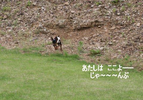 momiji-1-yamanoue3.jpg