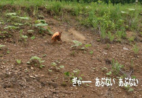 momiji-1-yamanoue4.jpg