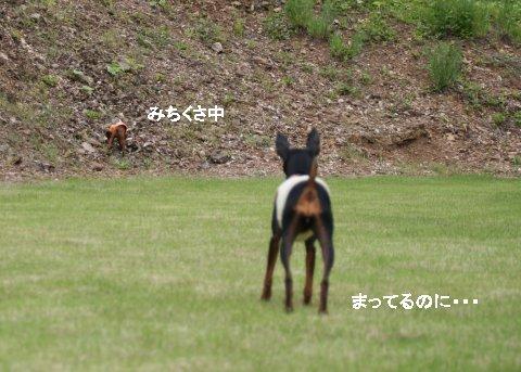 momiji-1-yamanoue6.jpg
