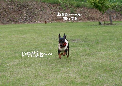 momiji-1-yamanoue7.jpg