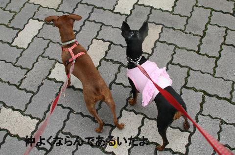 momiji-2-sanpo1.jpg