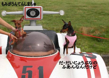 momiji-2-sanpo16.jpg