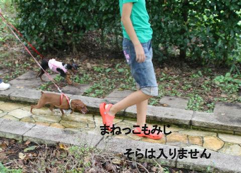 momiji-2-sanpo3.jpg