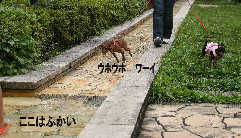 momiji-2-sanpo4.jpg