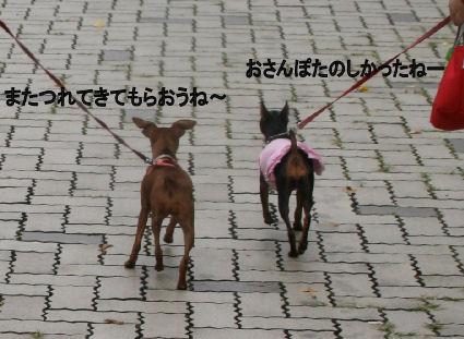 momiji-2-sanpo5.jpg