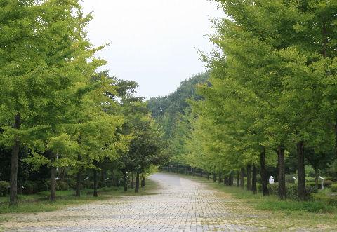 momiji-2-sanpo6.jpg