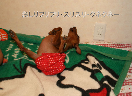 momiji-3-5.jpg