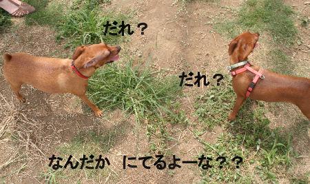 momiji-cocoa1.jpg