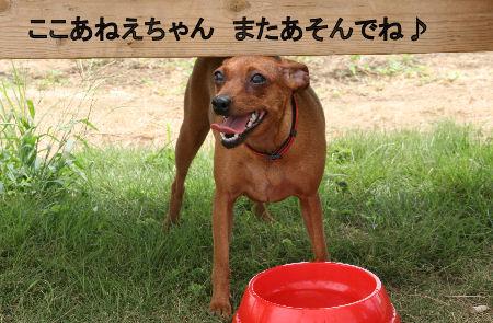momiji-cocoa10.jpg