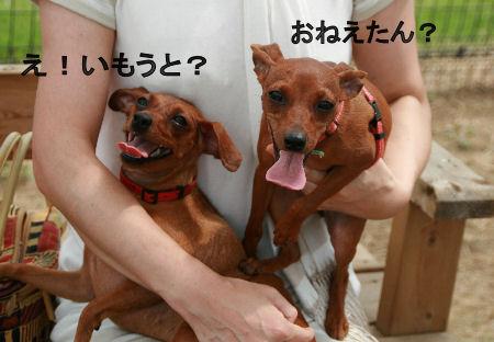 momiji-cocoa2.jpg
