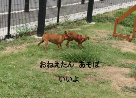 momiji-cocoa5.jpg