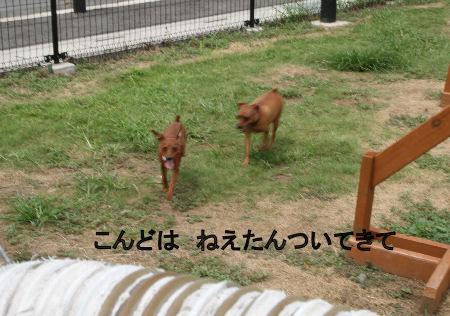 momiji-cocoa8.jpg