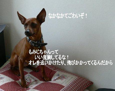 momiji-pachi1.jpg