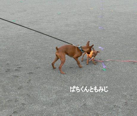 momiji-pachi2.jpg
