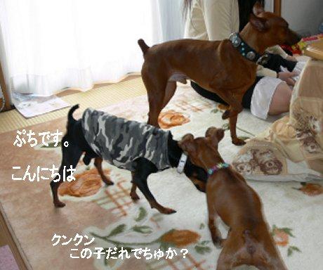 momiji-puchi.jpg