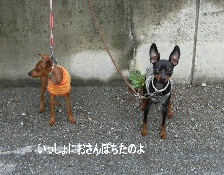 momiji-puchi1.jpg
