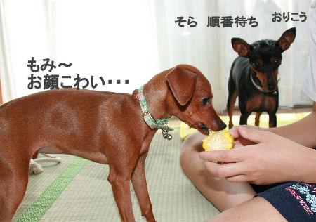 momiji-toumorokoshi1.jpg