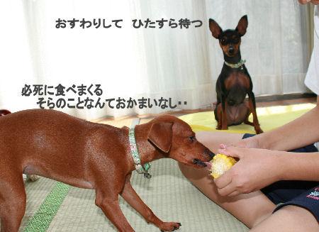 momiji-toumorokoshi3.jpg