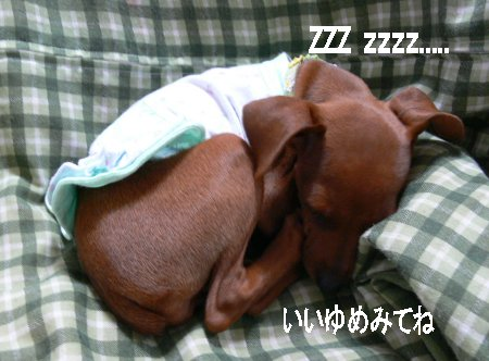 momiji22.jpg