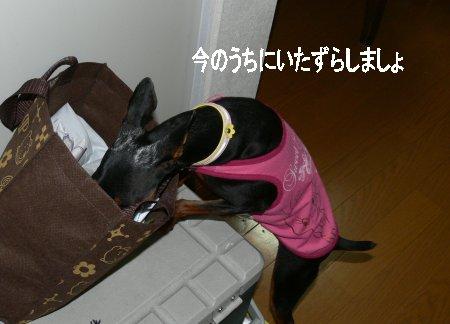 momiji23.jpg