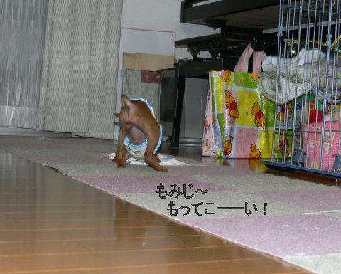momiji5_20080430213152.jpg