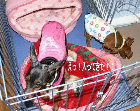 momiji9_20080430214051.jpg