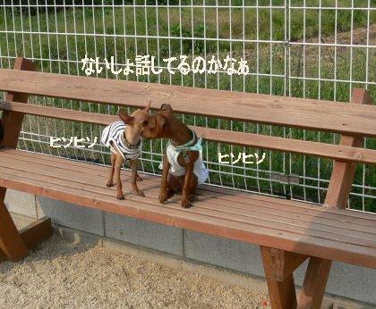 oasobikai-momi-yume1.jpg