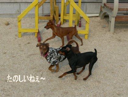 oasobikai517-3.jpg