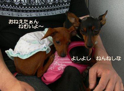 oasobikai517-6.jpg