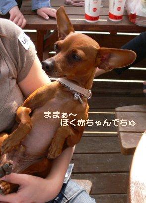 oasobikai517-7.jpg