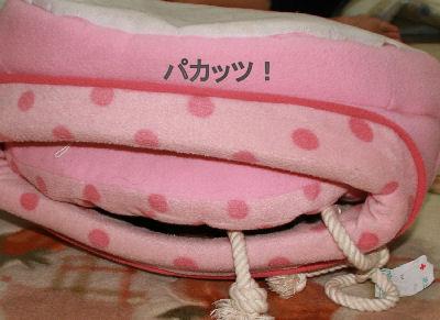 shinf-momiji2.jpg